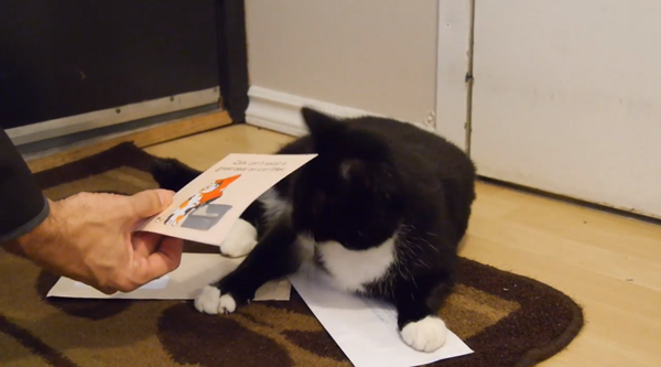 Cat owner picks the flyer up