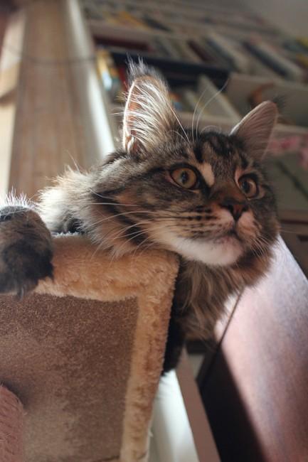 Pandora cat photo